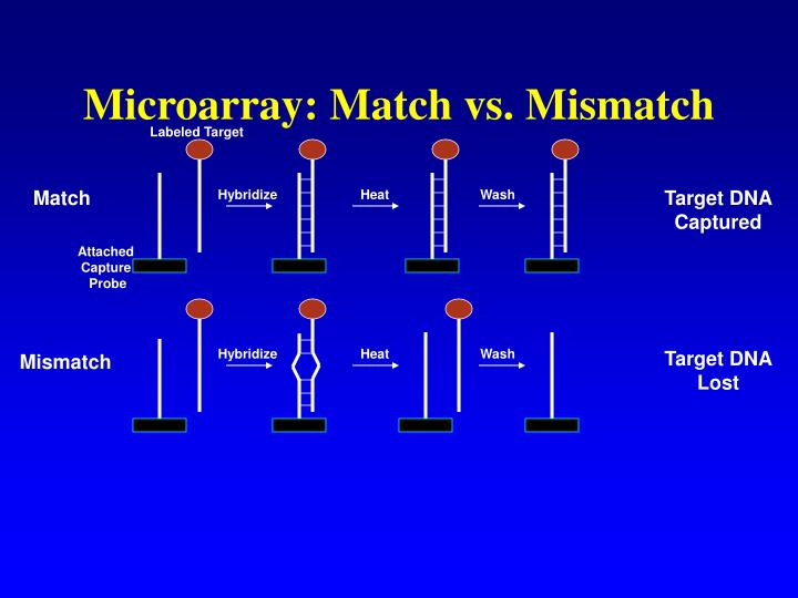 Microarray: Match vs. Mismatch