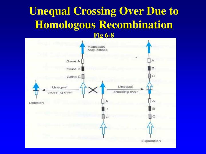 Unequal Crossing Over Due to Homologous Recombination