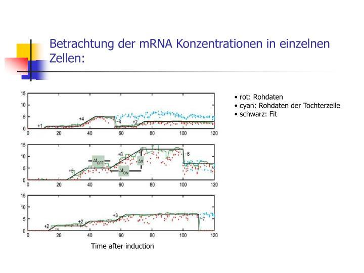 Betrachtung der mRNA Konzentrationen in einzelnen Zellen: