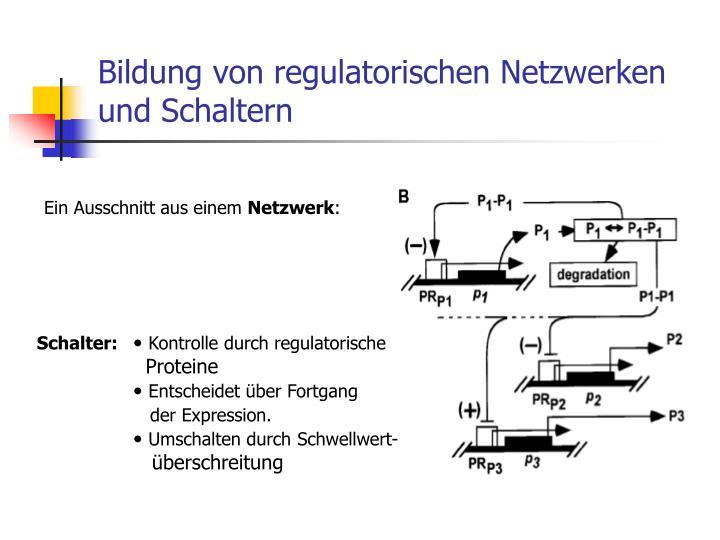 Bildung von regulatorischen Netzwerken und Schaltern