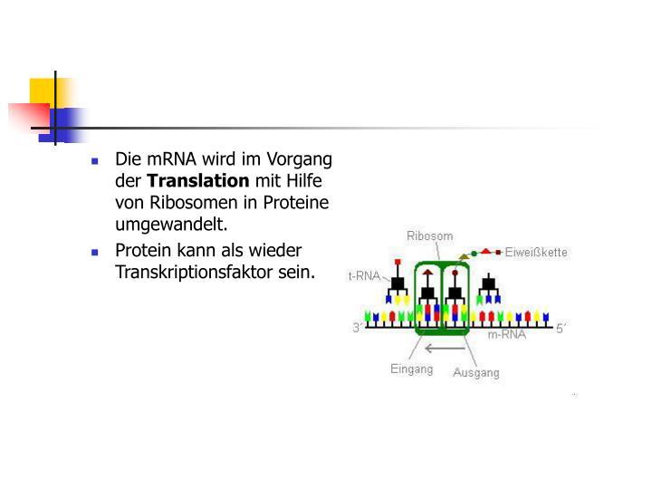 Die mRNA wird im Vorgang der