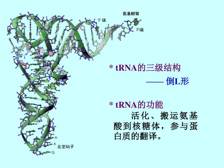 * tRNA