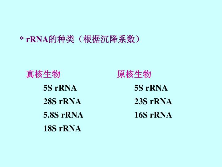 * rRNA