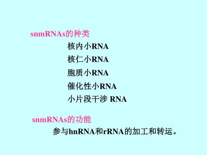 snmRNAs