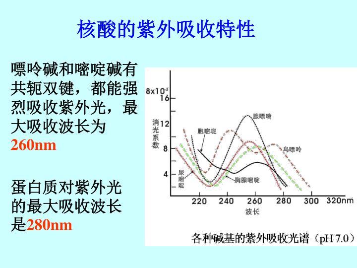 核酸的紫外吸收特性