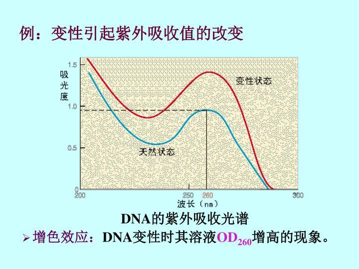 例:变性引起紫外吸收值的改变