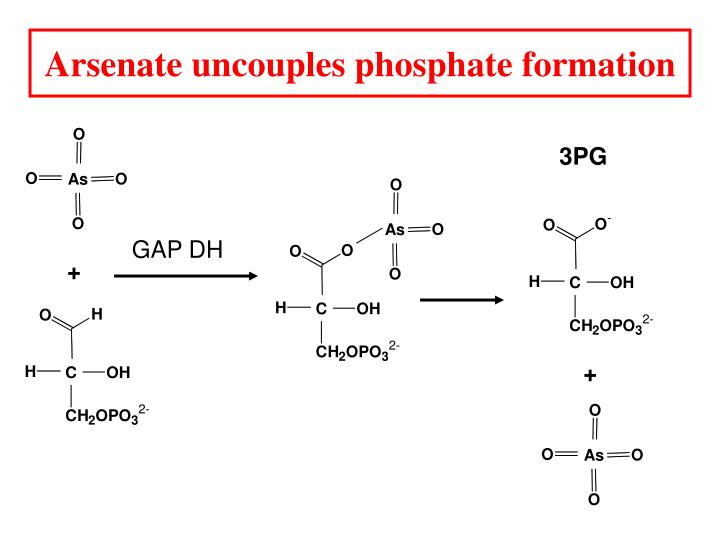 Arsenate uncouples phosphate formation