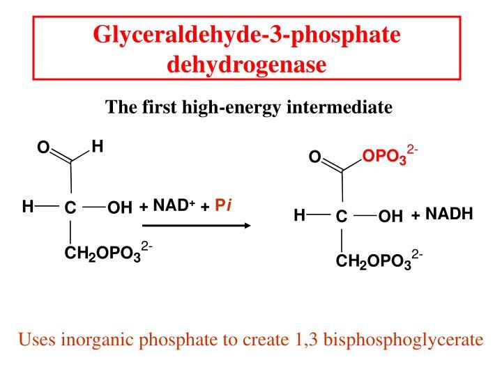 Glyceraldehyde-3-phosphate dehydrogenase
