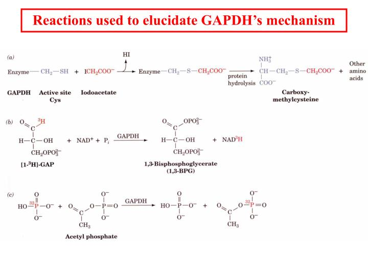 Reactions used to elucidate GAPDH's mechanism