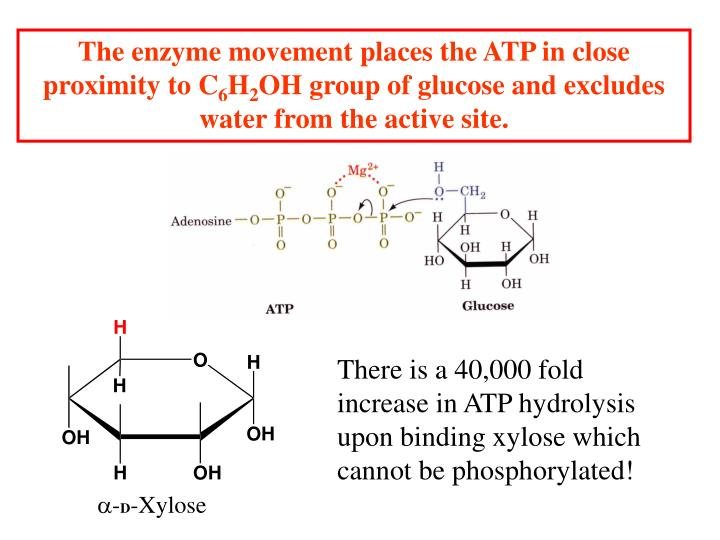 The enzyme movement places the ATP in close proximity to C