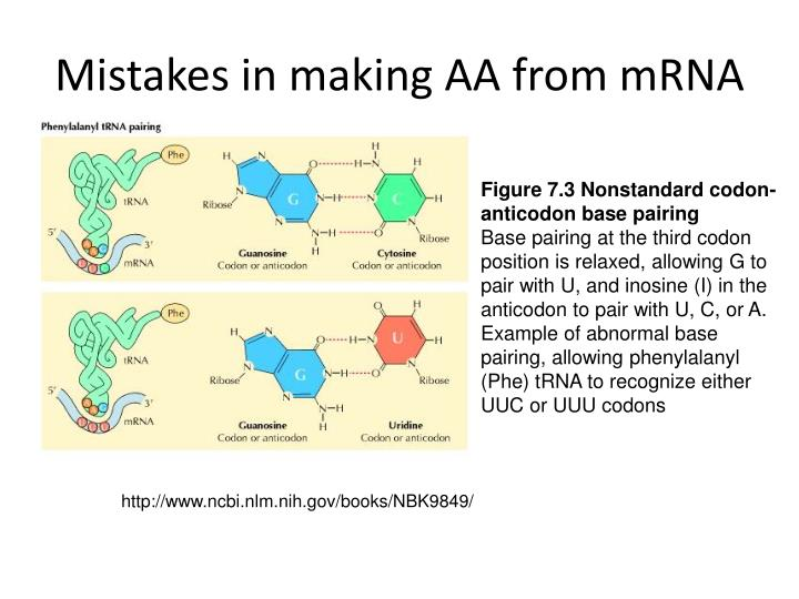 Mistakes in making AA from mRNA