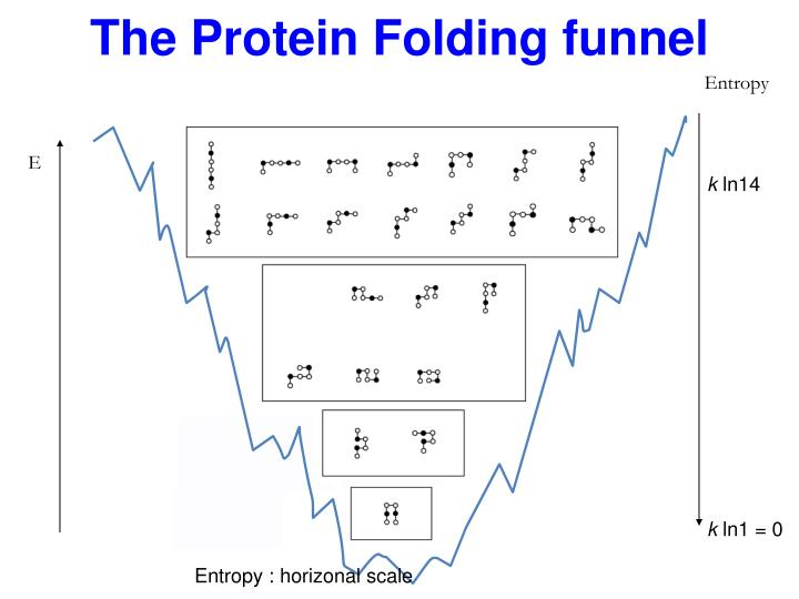 The Protein Folding funnel