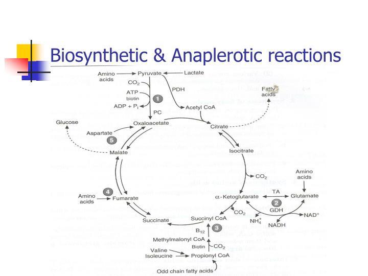 Biosynthetic & Anaplerotic reactions