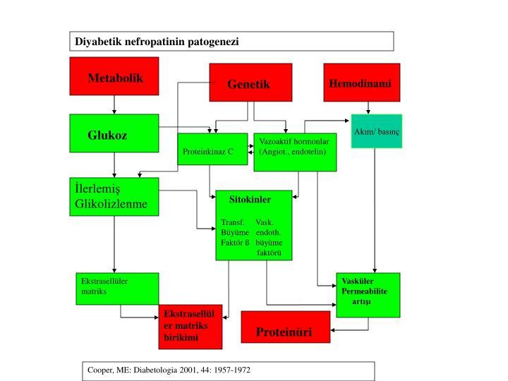 Diyabetik nefropatinin patogenezi