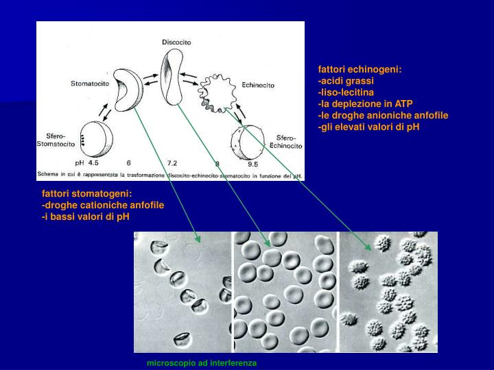 microscopio ad interferenza