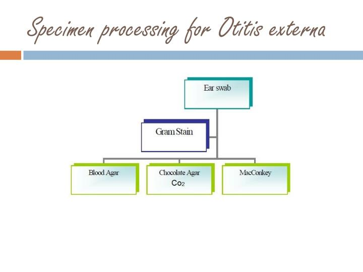 Specimen processing for Otitis externa