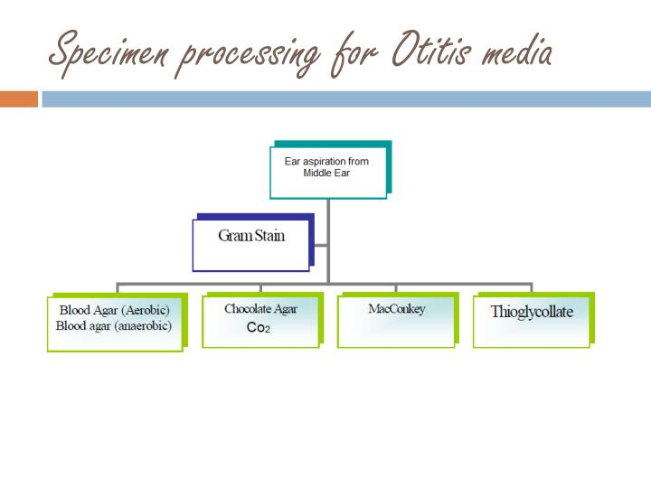 Specimen processing for Otitis media
