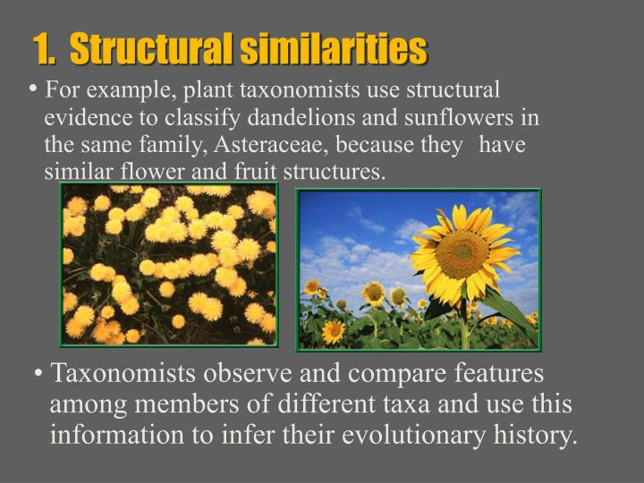 1.  Structural similarities