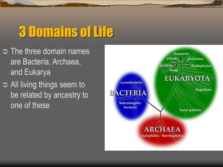 The three domain names are Bacteria, Archaea, and Eukarya