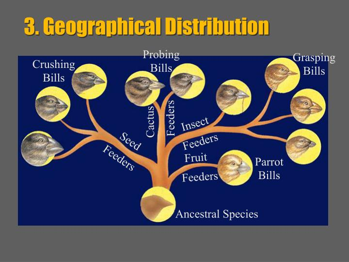 3. Geographical Distribution