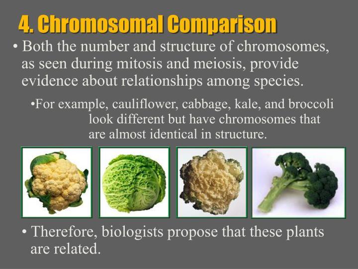 4. Chromosomal Comparison