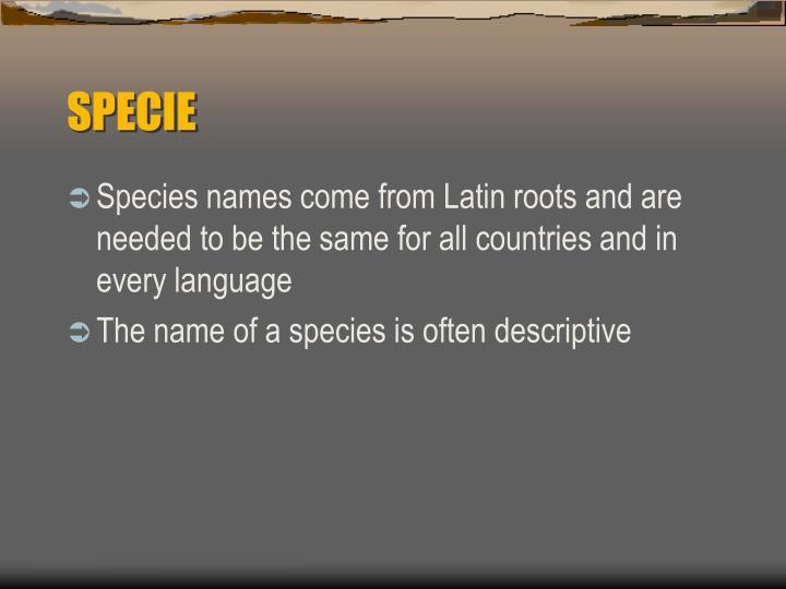 SPECIE
