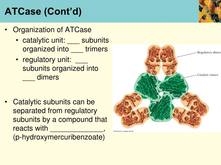 ATCase (Cont'd)
