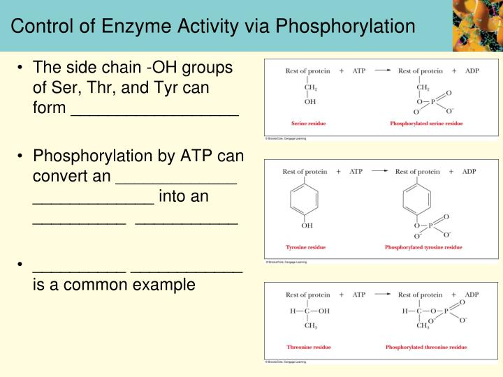 Control of Enzyme Activity via Phosphorylation