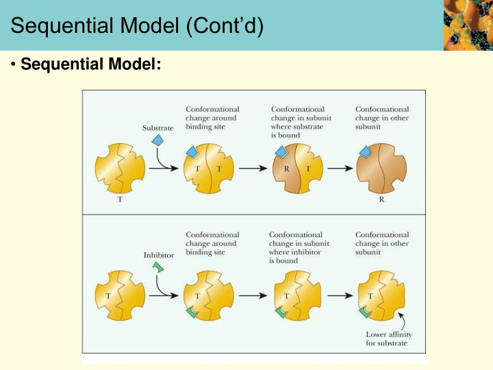 Sequential Model (Cont'd)