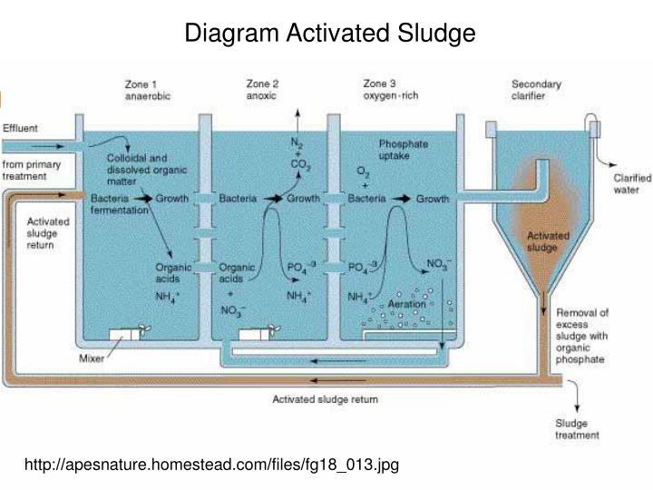 Diagram Activated Sludge