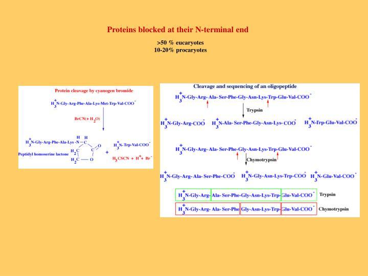 Proteins blocked at their N-terminal end