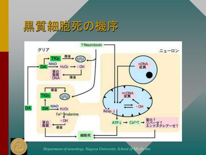 黒質細胞死の機序