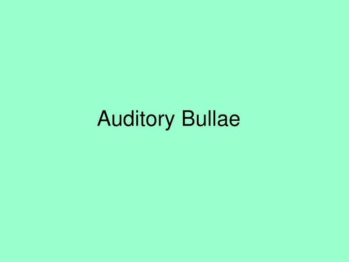 Auditory Bullae
