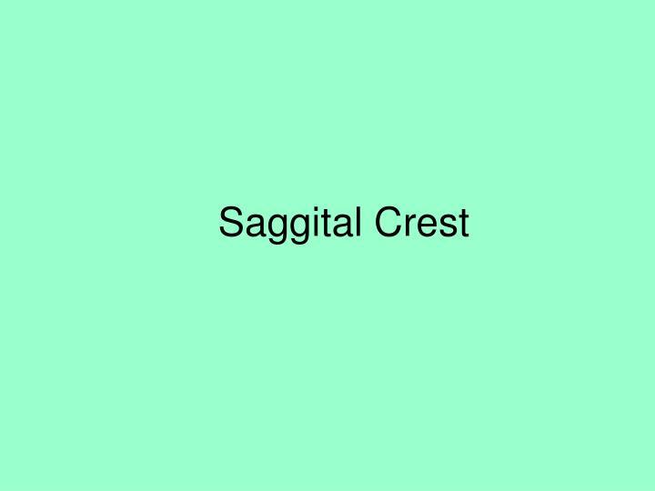 Saggital Crest