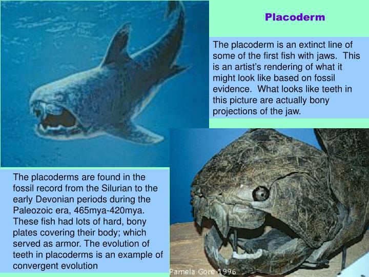 Placoderm