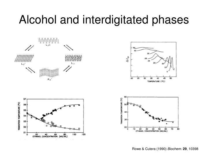 Alcohol and interdigitated phases