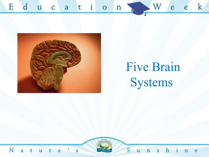 Five brain systems
