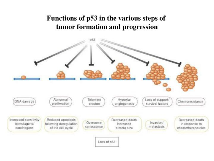 Functions of p53 in the various steps of