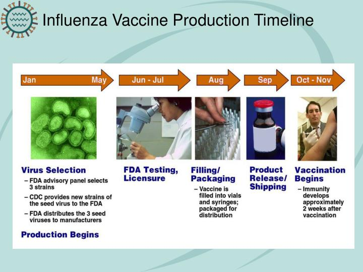 Influenza Vaccine Production Timeline