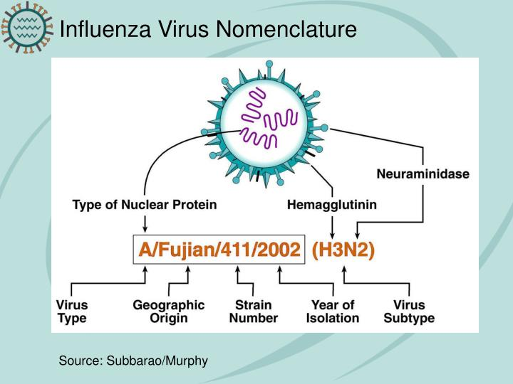 Influenza Virus Nomenclature