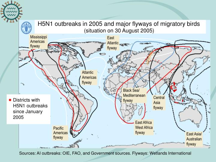 H5N1 outbreaks in 2005 and major flyways of migratory birds