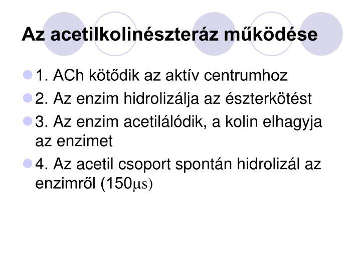 Az acetilkolinészteráz működése