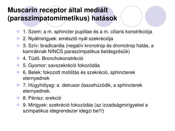 Muscarin receptor által mediált (paraszimpatomimetikus) hatások