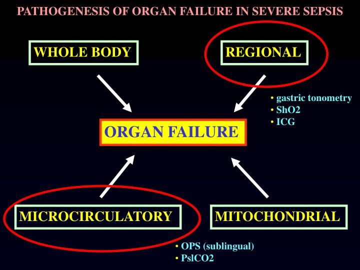 PATHOGENESIS OF ORGAN FAILURE IN SEVERE SEPSIS
