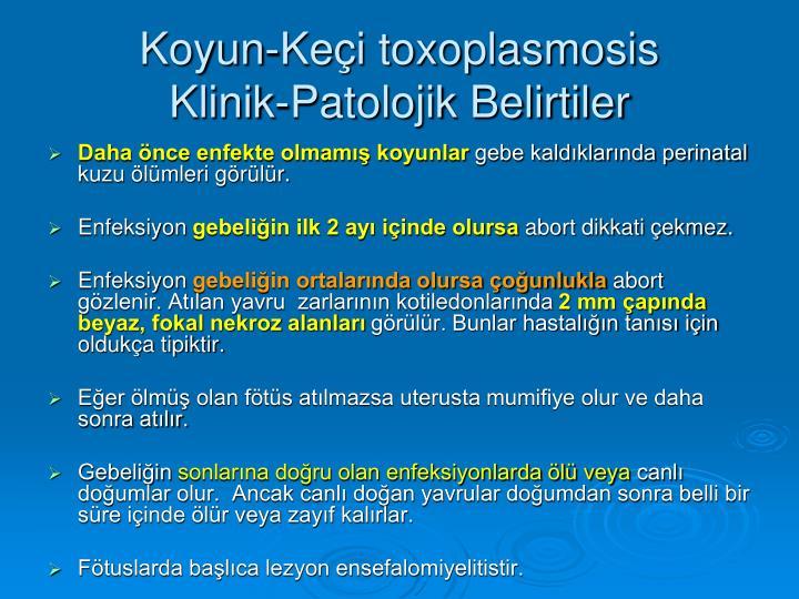 Koyun-Keçi toxoplasmosis