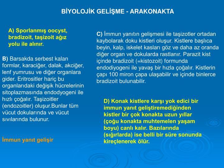 BİYOLOJİK GELİŞME - ARAKONAKTA