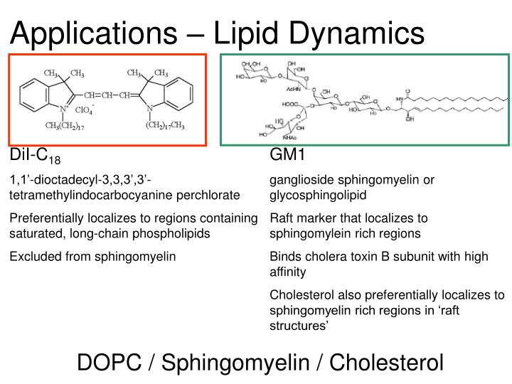 Applications – Lipid Dynamics