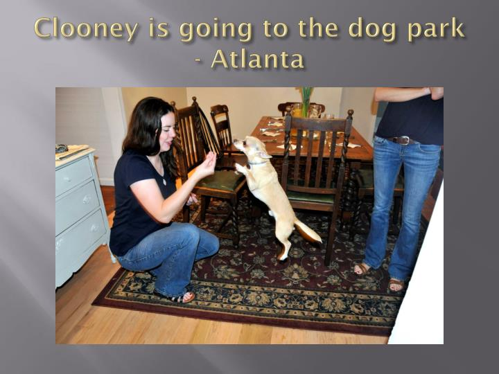 Clooney is going to the dog park - Atlanta