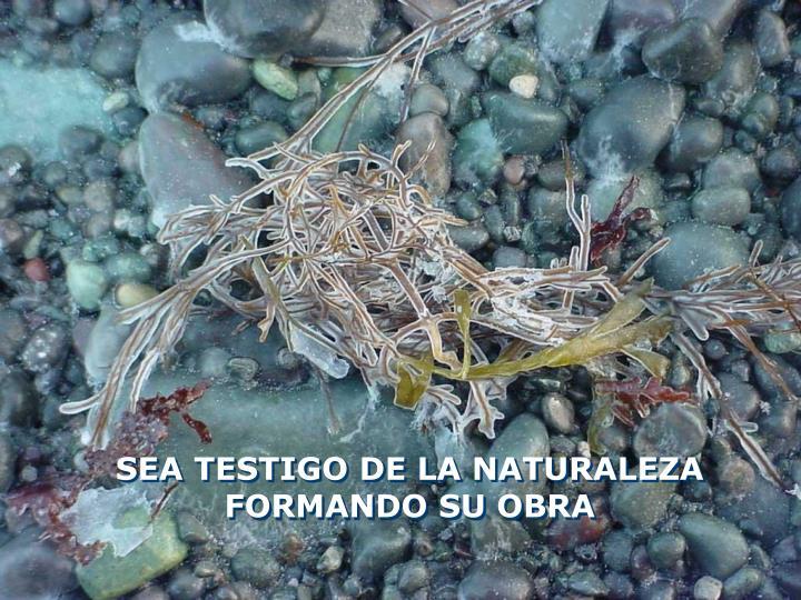 SEA TESTIGO DE LA NATURALEZA FORMANDO SU OBRA