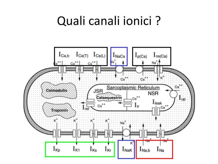 Quali canali ionici ?